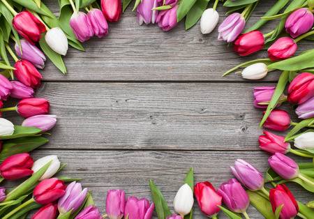 Frame of fresh tulips arranged on old wooden background Stock Photo