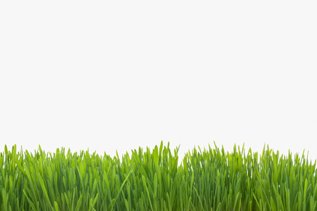 panoramic nature: Green grass isolated on white background