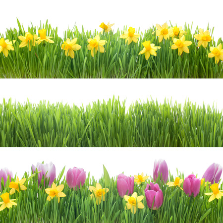 row: Green grass and spring flowers isolated on white background Stock Photo