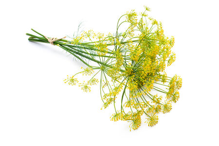 bunch of flowers: Bunch of fresh dill with flower isolated on white Stock Photo
