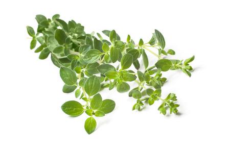 oregano plant: Twigs of oregano on a white background Stock Photo