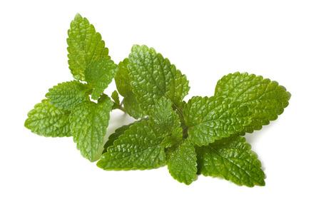 メリッサの新緑の葉が白い背景の分離 写真素材