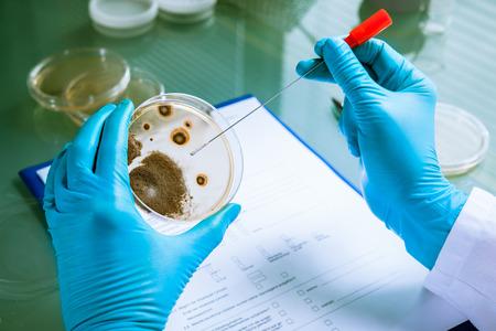 Kiemen groeien op een agarplaat in het laboratorium