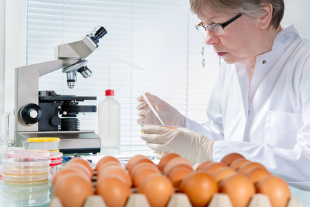 Quality control expert inspecting at chicken eggs in the laboratory Фото со стока - 36329865