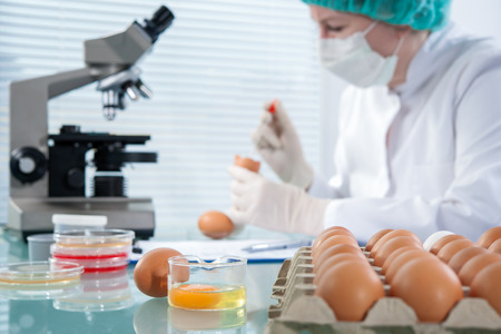 agricultural: Quality control expert inspecting at chicken eggs in the laboratory