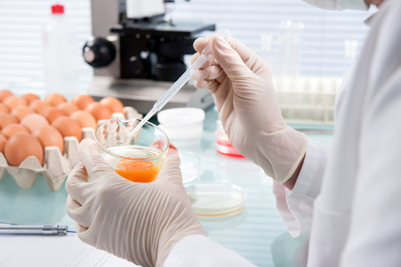 food inspection: Quality control expert inspecting at chicken eggs in the laboratory