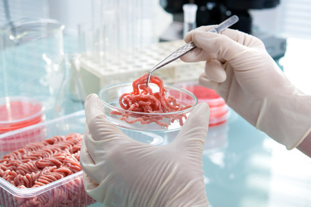 qualities: Food quality control expert inspecting at meat specimen in the laboratory