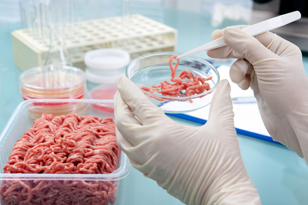 quality work: Food quality control expert inspecting at meat specimen in the laboratory