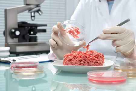 control de calidad: Experto en control de calidad de los alimentos en la inspecci�n de muestras de carne en el laboratorio Foto de archivo