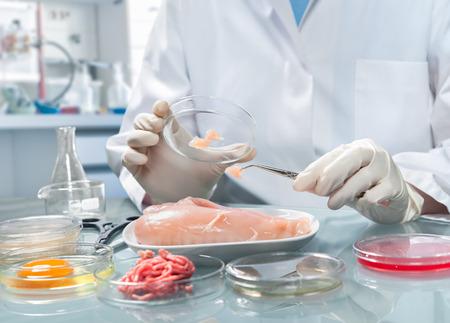 Kwaliteitscontrole expert inspecteren op voedsel model in het laboratorium Stockfoto