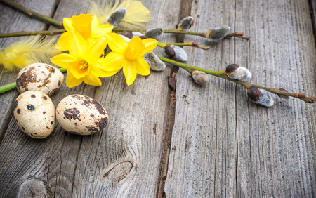 Quail eggs and daffodils on weathered wooden background photo