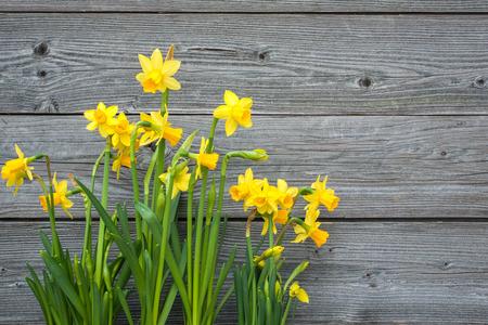 Jonquilles de printemps sur fond en bois ancien