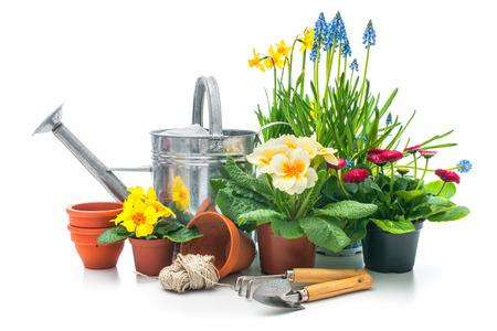 白い背景で隔離のガーデニング ツールと春の花