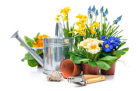 Potted plants: Spring flowers with gardening tools isolated on white background