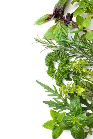 medicine: Hierbas verdes frescas aisladas sobre fondo blanco Foto de archivo