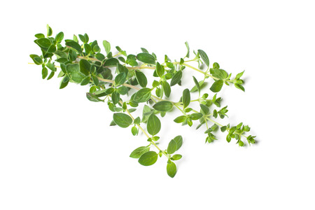 Twigs of oregano on a white background Banque d'images
