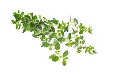 oregano: Twigs of oregano on a white background Stock Photo
