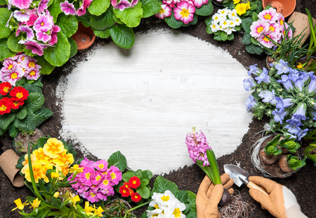 garden design: Frame of spring flower and gardening tools on old wooden background
