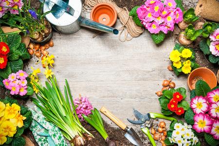 marco madera: Marco de flor de primavera y herramientas de jardinería en fondo de madera vieja Foto de archivo