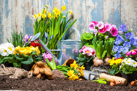 easter flowers: Gardening tools and flowers in the garden Stock Photo