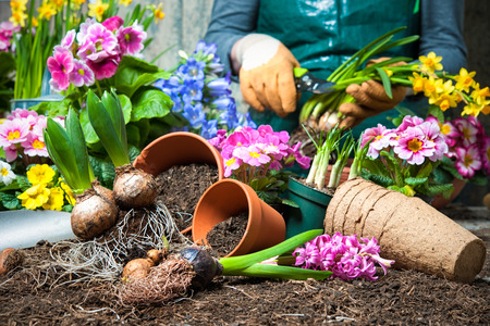 garden tool: Gardener planting flowers in pot with dirt or soil at back yard