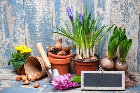 Tuingereedschap en bloemen in de tuin Stockfoto