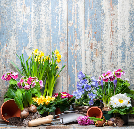 Gardening tools and flowers in the garden Stockfoto