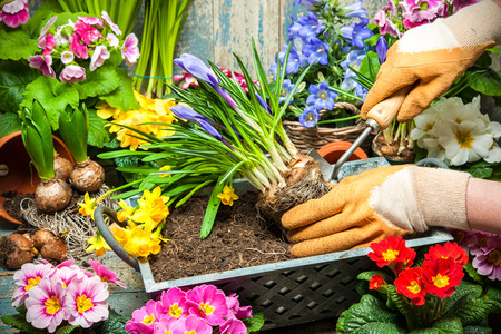 gardening tools: Gardening tools and flowers in the garden Stock Photo