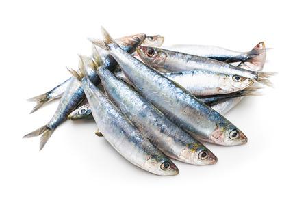 Frische rohe Sardinen isoliert auf weißem Hintergrund Standard-Bild - 37078326