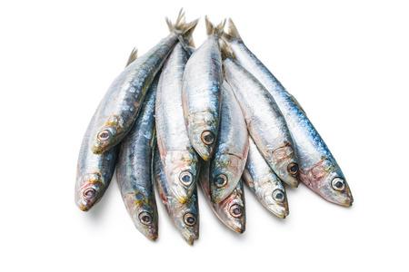 sardinas: Sardinas crudas frescas aisladas sobre fondo blanco Foto de archivo