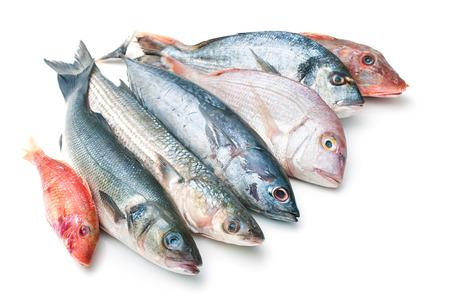 pescando: Pescado fresco de pescado y otros productos del mar aislado en el fondo blanco
