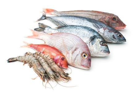Frischer Fang von Fisch und anderen Meeresfrüchten auf weißem Hintergrund