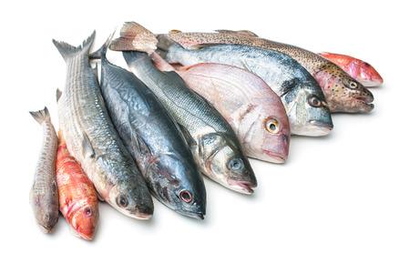 mariscos: Pescado fresco de pescado y otros productos del mar aislado en el fondo blanco