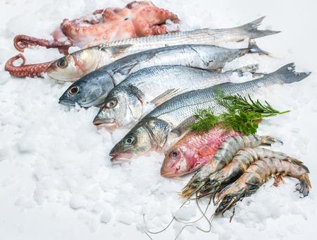 calamar: Mariscos en el hielo en el mercado de pescado