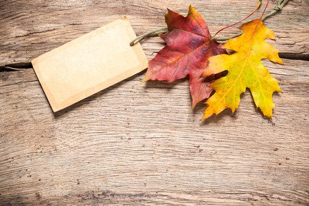 Autumn or fall sale tag with maple leaves 写真素材