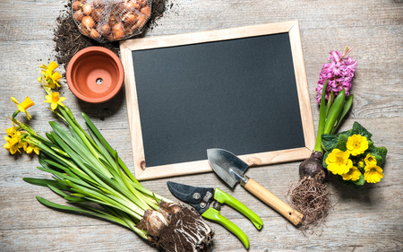 gardening gloves: Gardening tools and flowers with a blank board for your text Stock Photo