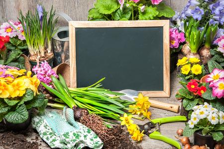 jardines con flores: Herramientas de Jardiner�a y flores con una tarjeta en blanco para el texto Foto de archivo