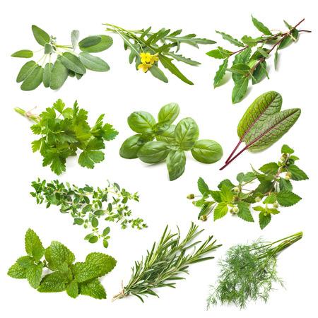 herbs: Colección de las hierbas de cocina aisladas sobre fondo blanco