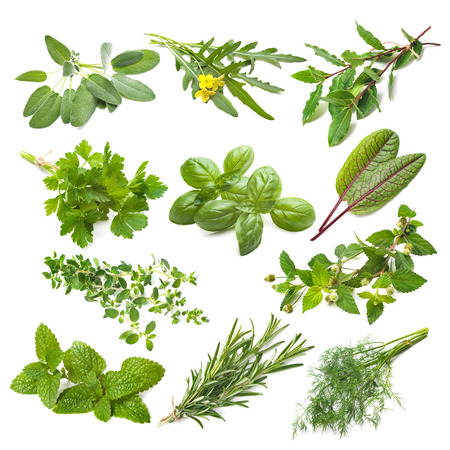 herb: Kitchen herbs collection isolated on white background
