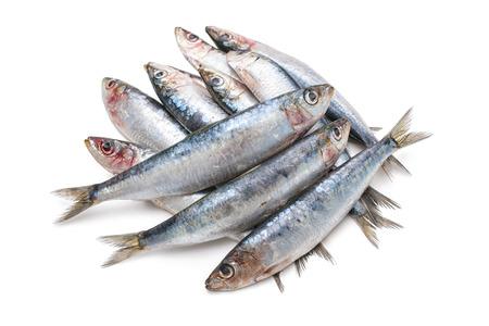 sardines: Fresh raw sardines isolated  on white background