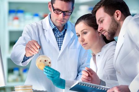 Grupo de científicos que trabajan en el laboratorio  Foto de archivo - 42292603