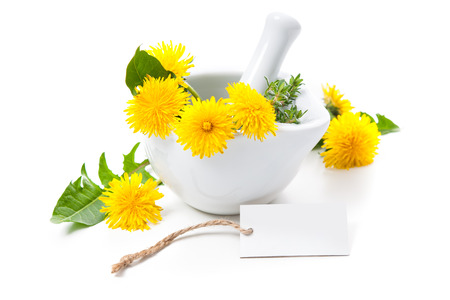 botanical remedy: Dandelion and a mortar. Alternative medicine concept