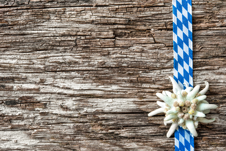 Edelweiss with Bavarian ribbon on weathered wood background Stock Photo