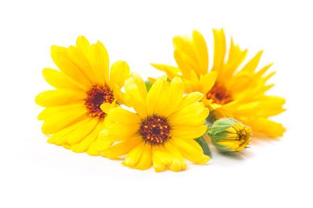 flowers: Caléndula officinalis. Flores de la maravilla con hojas aisladas en blanco