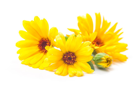 flowers close up: Calendula officinalis. Marigold flowers with leaves isolated on white