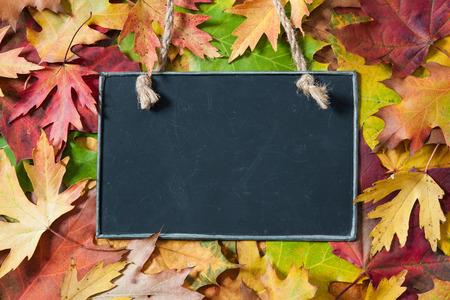 背景に黒板と秋のカエデを葉します。