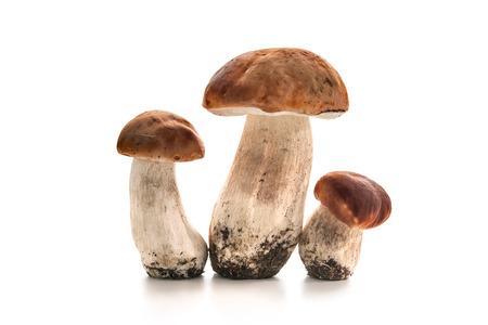 ポルチーニ茸の孤立した白い背景 写真素材
