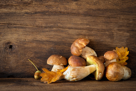 mushroom picking: Harvested wild porcini mushrooms on wooden background