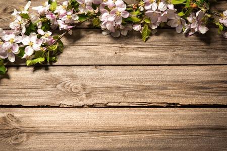 Lente bloeiende tak op houten achtergrond. appelbloesems Stockfoto
