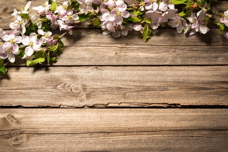 arbol de pascua: Spring flowering branch on wooden background. Apple blossoms